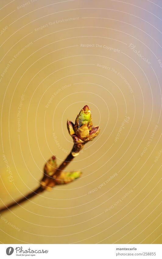 Januar... Natur blau grün Pflanze Winter gelb Umwelt Blüte Park braun gold wild ästhetisch authentisch Sträucher dünn