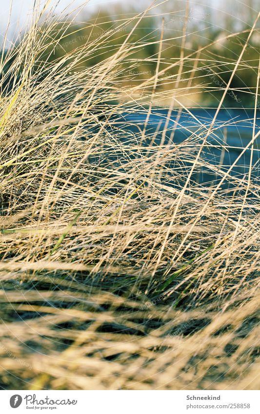 Am Ufer Umwelt Natur Pflanze Tier Schönes Wetter Gras Sträucher Wiese Küste Seeufer Flussufer ruhig Düne Dünengras abstrakt dünn trist Wildpflanze Schilfrohr