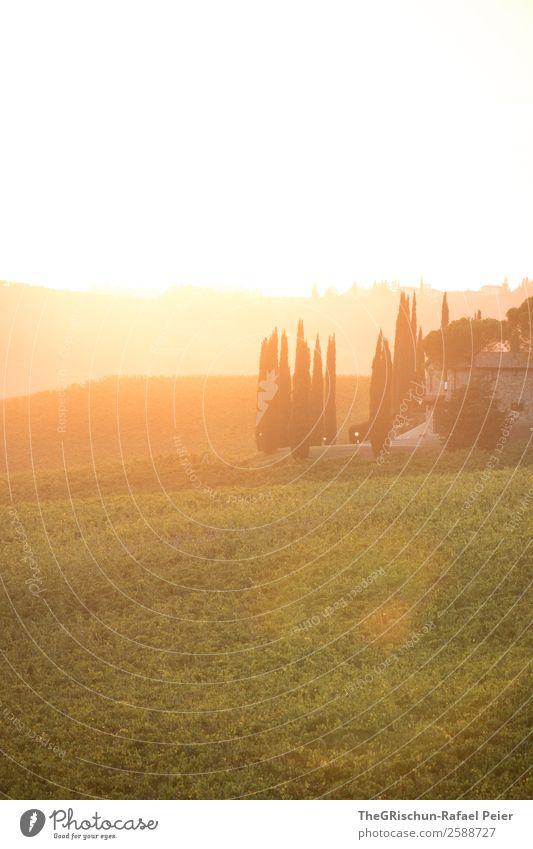 Sunset Natur Landschaft Aggression Toskana Sonnenuntergang Italien Stimmung Romantik mehrfarbig Reisefotografie Ferien & Urlaub & Reisen Farbfoto Außenaufnahme