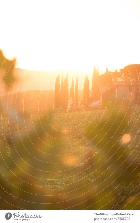 Tuscany-Sunset Natur Landschaft ästhetisch Toskana Wein Italien Reisefotografie Ferien & Urlaub & Reisen Erholung Sonnenuntergang Gegenlicht Weintrauben
