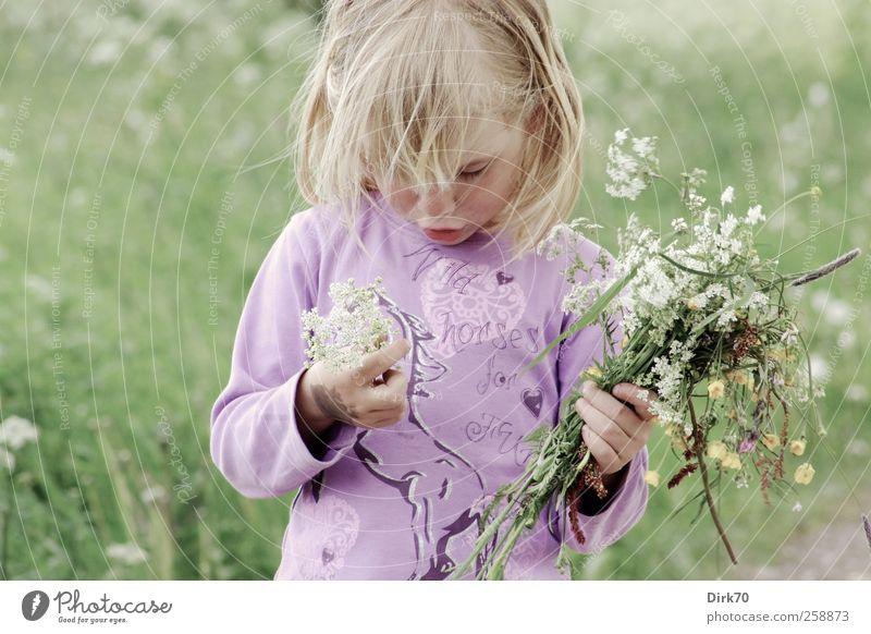 Frühling ! Spielen Ausflug Freiheit Mensch Kind Mädchen Kindheit 1 3-8 Jahre Blume Blüte Wildpflanze Blumenstrauß Wiese Blühend Duft träumen Wachstum natürlich