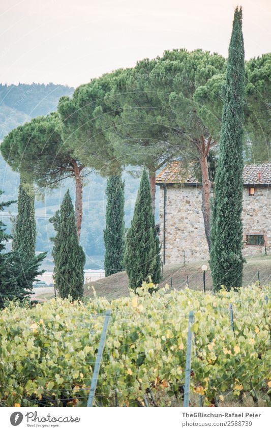 Allee Natur grün Zypresse Haus Ferien & Urlaub & Reisen Erholung Wein Weinberg Baum Italien Toskana Hügel Farbfoto Außenaufnahme Menschenleer Textfreiraum unten