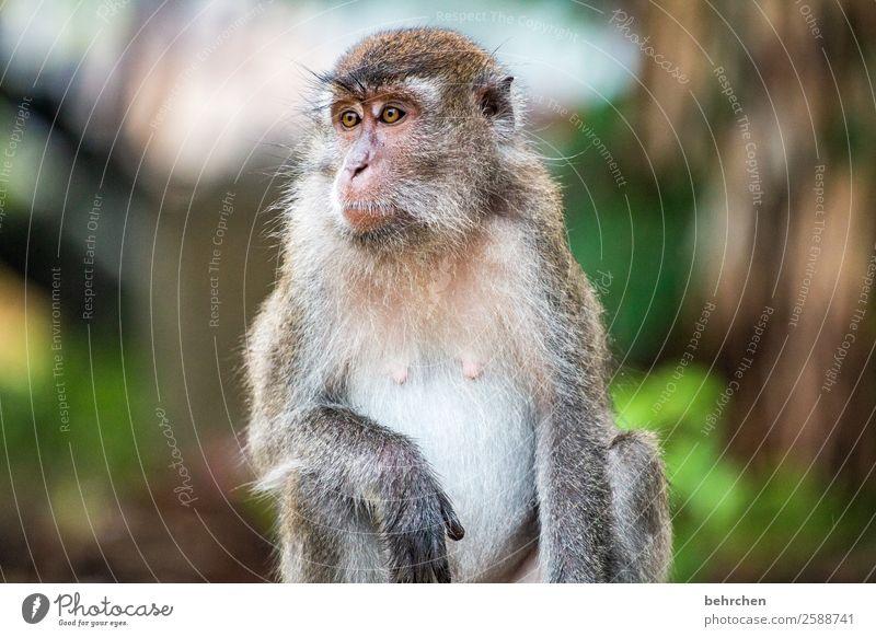in freiheit leben | FERNWEH Ferien & Urlaub & Reisen schön Tier Ferne Auge Tourismus außergewöhnlich Freiheit Ausflug nachdenklich Wildtier Abenteuer