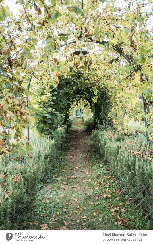Allee Natur grün Garten Tunnelblick Bogen Perspektive rund Wege & Pfade ruhig Erholung Pause Farbfoto Außenaufnahme Menschenleer Textfreiraum unten
