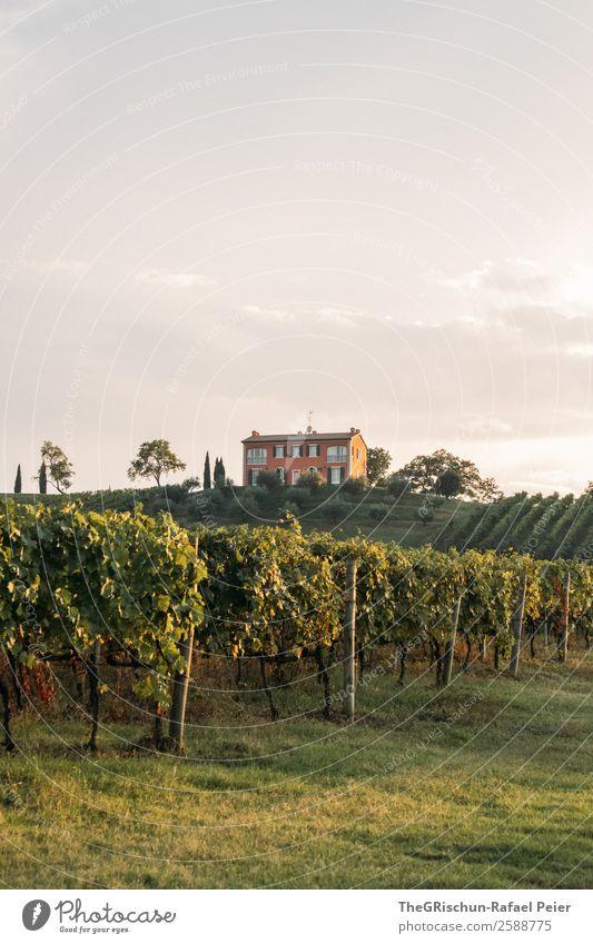 Weingut Natur Landschaft grün Haus Berghang Hügel Weinberg Weintrauben Baum Italien Stimmung Farbfoto Außenaufnahme Menschenleer Textfreiraum unten Tag Abend