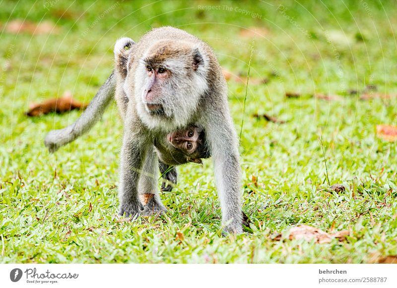 emotion | mutterliebe...vertrauen und beschützen Ferien & Urlaub & Reisen schön Tier Ferne Tierjunges Liebe Tourismus Freiheit außergewöhnlich Zusammensein