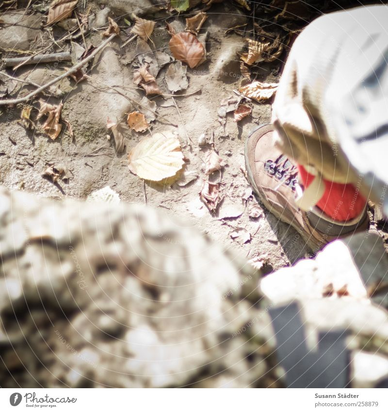 Chamansülz | Baumloben Mensch Jugendliche 18-30 Jahre Erwachsene Berge u. Gebirge Herbst Freiheit Beine Fuß wandern 45-60 Jahre Ausflug einzigartig Abenteuer