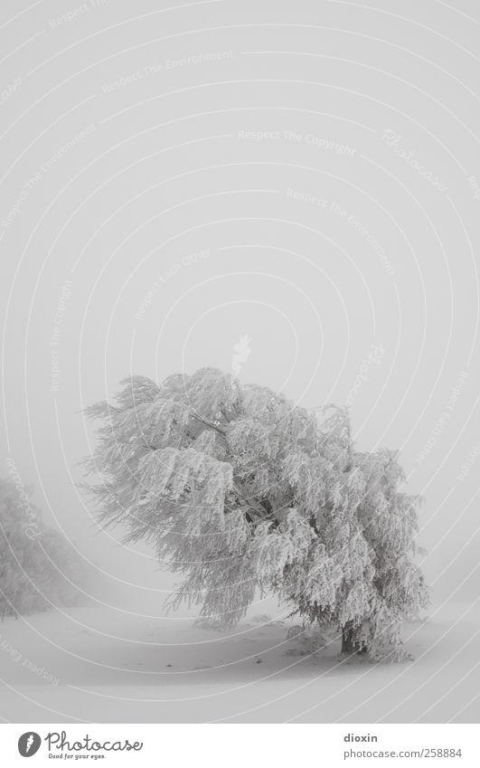 Baumloben | Winterbuchen Pt.2 Himmel Natur weiß Pflanze Ferien & Urlaub & Reisen kalt Schnee Umwelt Landschaft Schneefall Wetter Eis Wind Nebel