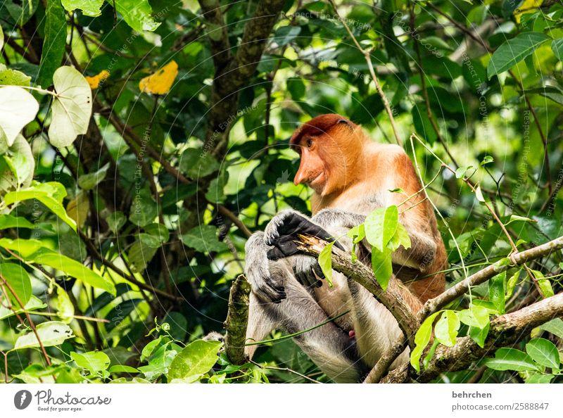 gelassenheit Ferien & Urlaub & Reisen Natur Landschaft Baum Tier Ferne Tourismus außergewöhnlich Freiheit Ausflug Wildtier Lächeln Abenteuer fantastisch Asien