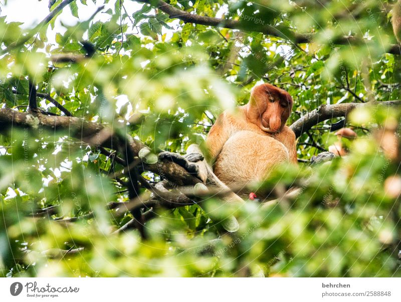 gut ausgestattet zum BETTHUPFERLn Ferien & Urlaub & Reisen Baum Blatt Ferne Tourismus außergewöhnlich Freiheit Ausflug Wildtier Abenteuer fantastisch Nase Asien