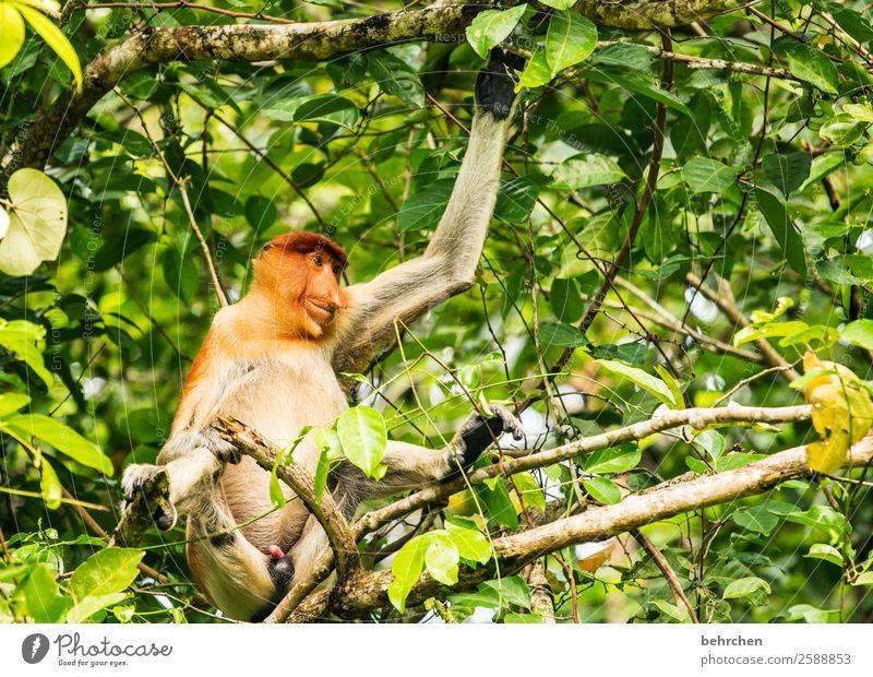 emotion | ein lächeln am morgen... Natur Ferien & Urlaub & Reisen Baum Erholung Tier Ferne lustig Tourismus außergewöhnlich Freiheit Ausflug Wildtier Abenteuer