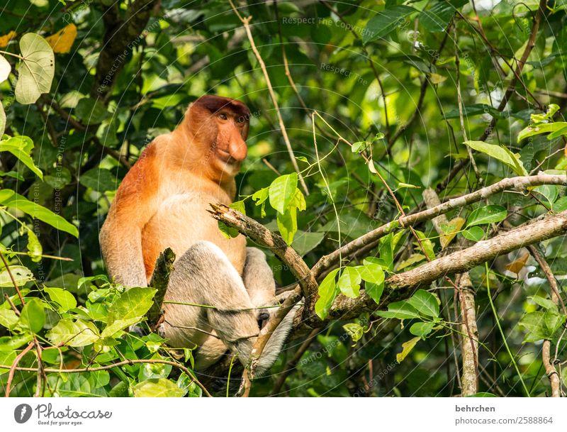 probier's mal mit gemütlichkeit... Ferien & Urlaub & Reisen Natur Baum Tier Blatt Ferne lustig Tourismus außergewöhnlich Freiheit Ausflug wild Wildtier