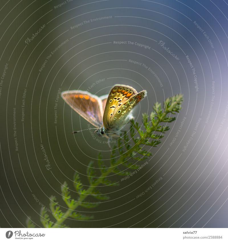 filigran Natur Sommer Pflanze schön Tier Blatt Umwelt Frühling Gras klein Zufriedenheit elegant ästhetisch genießen einzigartig Flügel