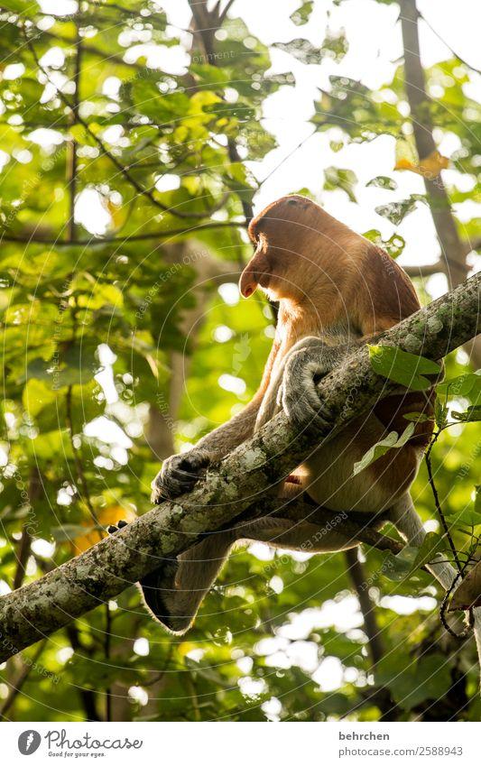 objektiv   es kommt doch auf die größe an! Tierporträt Sonnenlicht Gegenlicht Kontrast Licht Tag Außenaufnahme Farbfoto gemütlich Tierschutz Umweltschutz