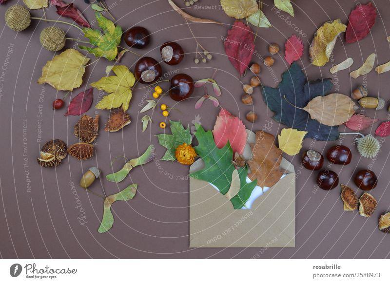 herbstliche Grüße mit Briefumschlag, Blättern und Früchten Natur Ferien & Urlaub & Reisen Pflanze Blatt Herbst Umwelt natürlich braun Dekoration & Verzierung