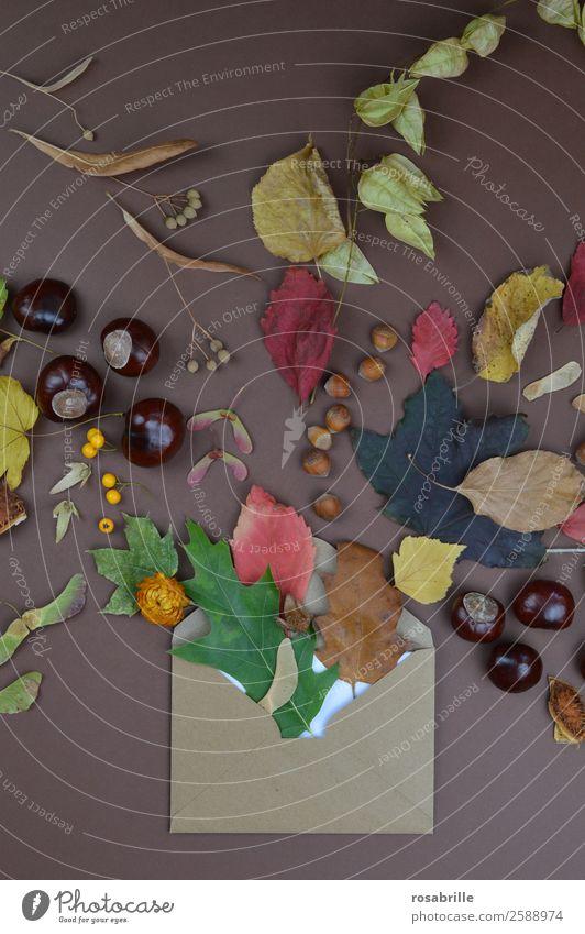 herbstliche Grüße mit Briefumschlag, Blättern und Früchten Natur Ferien & Urlaub & Reisen Pflanze Blume Blatt Freude Herbst Umwelt Blüte natürlich braun