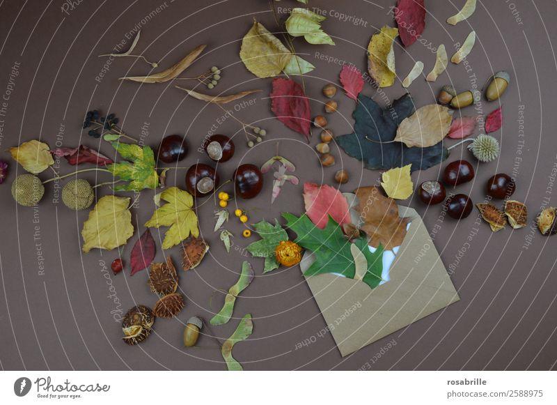 herbstliche Grüße mit Briefumschlag, Blättern und Früchten Umwelt Natur Herbst Pflanze Blatt Blüte Jahreszeiten Kastanie Samen Nuss Eicheln Ahornsamen