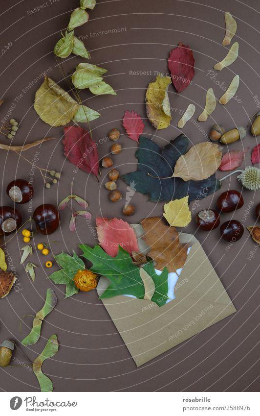 herbstliche Grüße mit Briefumschlag, Blättern und Früchten Natur Pflanze Blatt Herbst Umwelt natürlich braun Freizeit & Hobby Dekoration & Verzierung