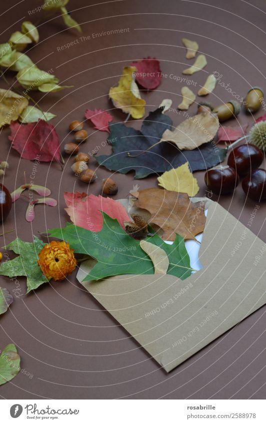 herbstliche Grüße mit Briefumschlag, Blättern und Früchten Umwelt Natur Pflanze Herbst Blatt Blüte Jahreszeiten Dekoration & Verzierung Sammlung Post natürlich