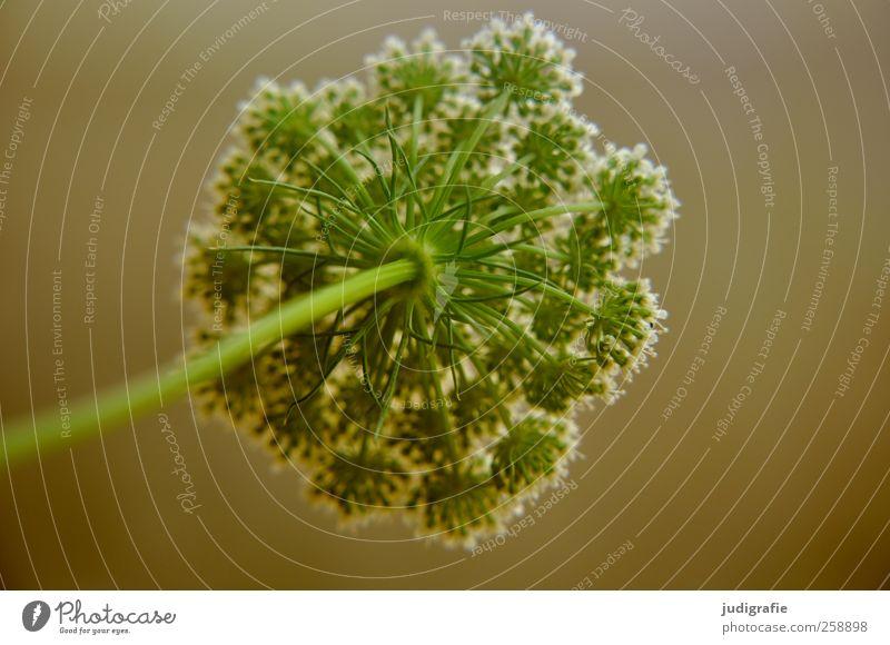 Wiese Natur grün schön Pflanze Blume Umwelt Garten Blüte natürlich Wachstum zart Wildpflanze