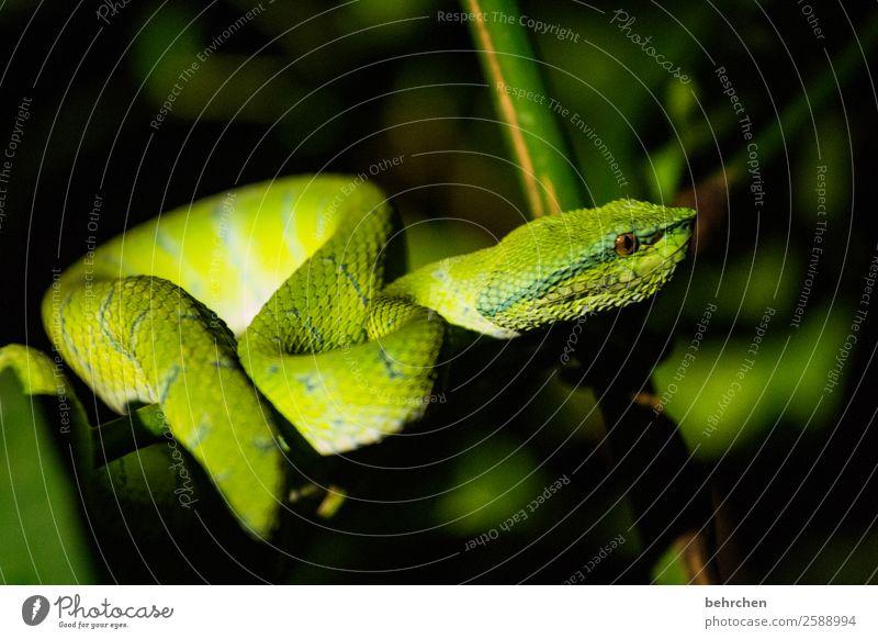 grenzüberschreitung | auf eigene gefahr! Natur Ferien & Urlaub & Reisen schön grün Tier Ferne Tourismus Freiheit außergewöhnlich Ausflug Wildtier Abenteuer