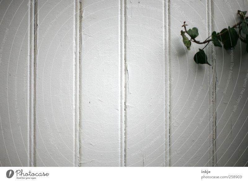 Efeu vs. leere Fassade Pflanze Garten Menschenleer Mauer Wand Holz Linie alt dehydrieren Wachstum einfach trist wild grün weiß Gefühle Stimmung Natur Verfall
