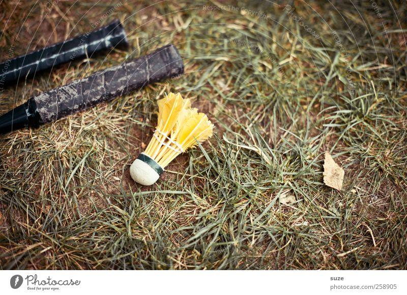 Yellow Bird Natur grün schwarz gelb Umwelt Wiese Spielen Gras Garten Kindheit Freizeit & Hobby liegen Rasen Griff Funsport Adjektive
