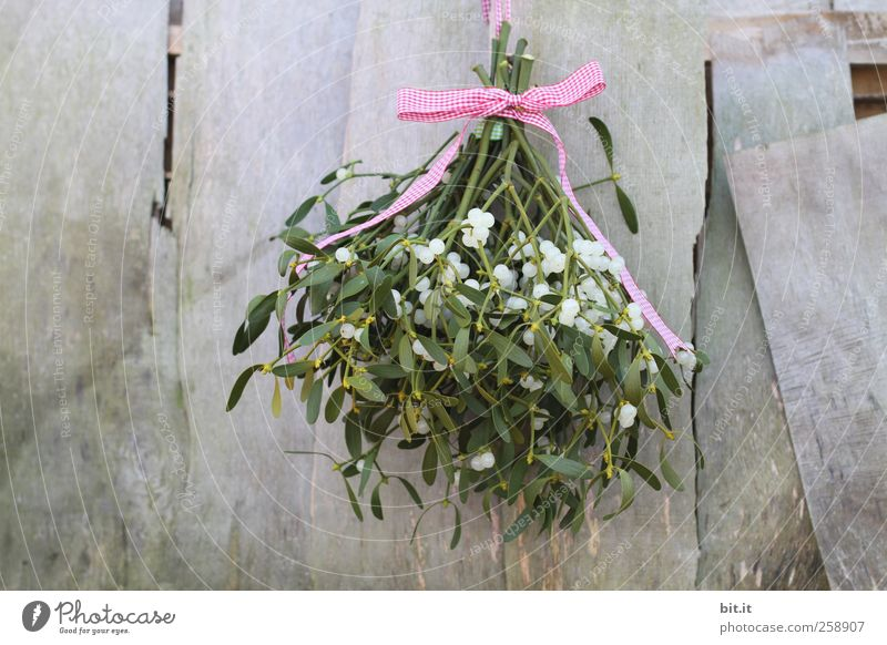 Mistelzweig Weihnachten & Advent grün Pflanze Blatt Wand Blüte Wohnung frisch Häusliches Leben Dekoration & Verzierung rund Romantik Hütte hängen Feste & Feiern kariert