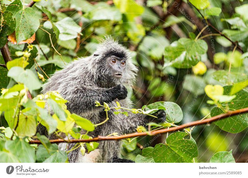 emotion | wat, schon wieder montag??? Ferien & Urlaub & Reisen Tourismus Ausflug Abenteuer Ferne Freiheit Natur Urwald Wildtier Tiergesicht Fell Affen