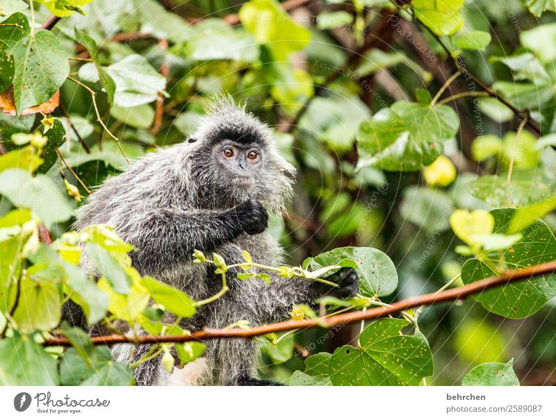 du affe Ferien & Urlaub & Reisen Baum Tier Blatt Ferne Tourismus außergewöhnlich Freiheit Ausflug Wildtier Abenteuer fantastisch niedlich Neugier Asien Fernweh