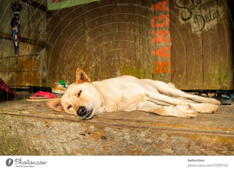 der tag nach der weihnachtsfeier;) Ferien & Urlaub & Reisen Hund schön Erholung Tier Ferne Tourismus Freiheit Ausflug träumen liegen Abenteuer schlafen Asien