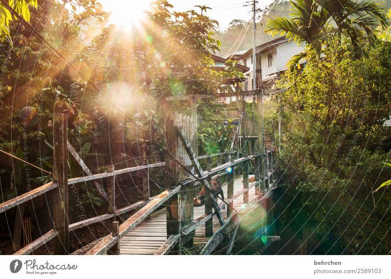 *1100* lieblingsorte Natur Ferien & Urlaub & Reisen Hund schön Landschaft Baum Erholung ruhig Ferne Tourismus außergewöhnlich Freiheit Ausflug Abenteuer