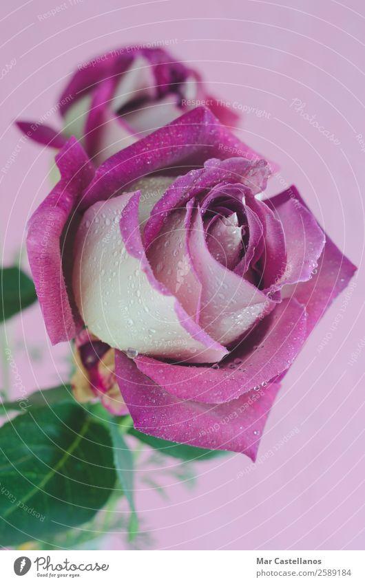 Frau Natur Sommer Pflanze Farbe schön grün Blume Blatt Erwachsene Liebe Blüte Frühling natürlich feminin Gefühle