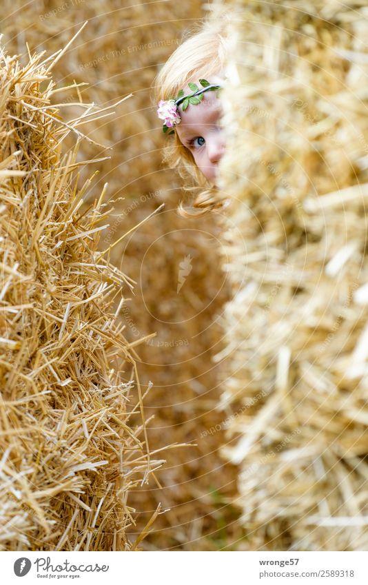 Versteckspiel Mensch Kind Kleinkind Mädchen 1 3-8 Jahre Kindheit Spielen gelb gold Freude verstecken Suche Herbst Strohballen Blick in die Kamera Farbfoto