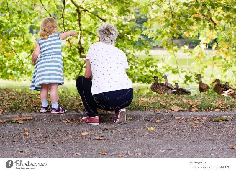 Oma und Enkelin füttern Enten am Teich Mensch Kind Mädchen Frau Erwachsene Weiblicher Senior Großmutter 2 3-8 Jahre Kindheit 45-60 Jahre Sommer Baum Tiergruppe