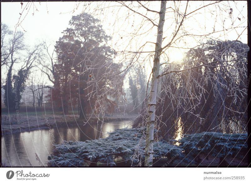 kalter Tag Natur Stadt Pflanze Tier Umwelt Landschaft Herbst Garten Stil träumen Kunst Park Stimmung Eis Freizeit & Hobby