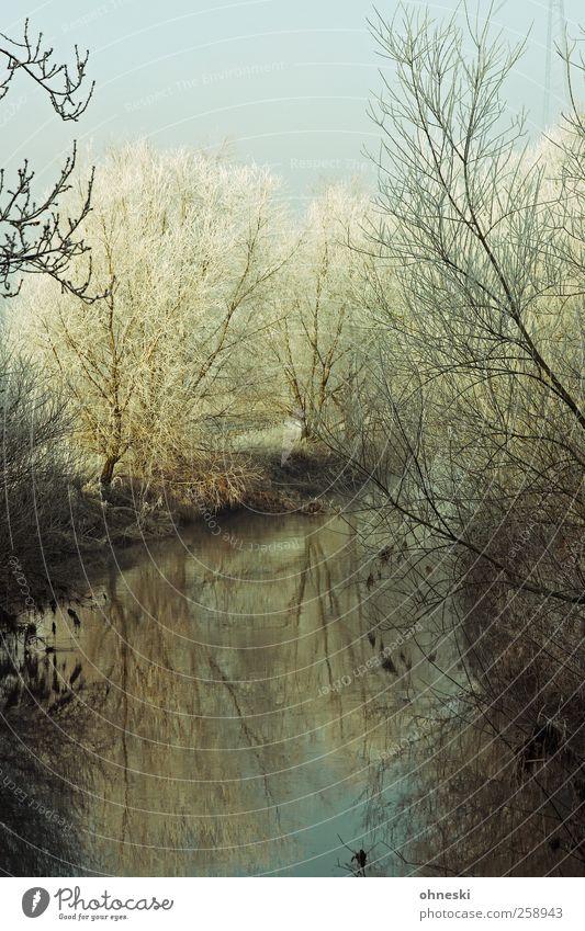 Else Natur Landschaft Wasser Winter Eis Frost Baum Ast Zweig Flussufer kalt Einsamkeit Erholung Farbfoto Gedeckte Farben Außenaufnahme Morgen