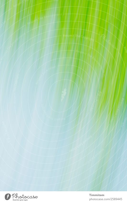 Frühling! Umwelt Natur Pflanze Himmel Wolken Schönes Wetter Baum Grünpflanze Park Bewegung ästhetisch Freundlichkeit blau grün weiß Gefühle Zufriedenheit