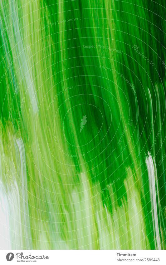 Grün, bewegt (vertikal) Umwelt Natur Pflanze Baum Garten Bewegung natürlich grün Gefühle Freude Farbfoto Außenaufnahme Menschenleer Bewegungsunschärfe
