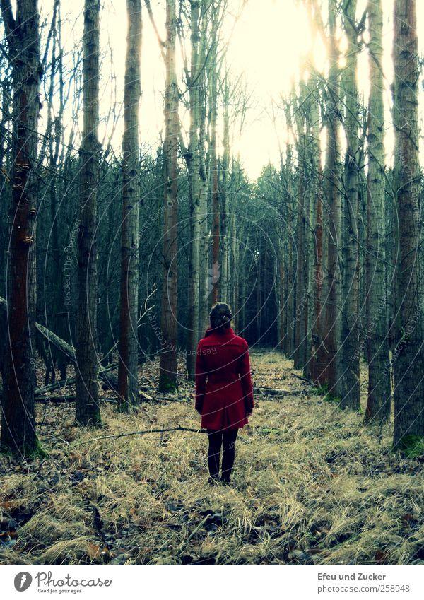 just a little bit sleepy hollow Mensch Natur Jugendliche Baum ruhig Erwachsene Wald Umwelt Landschaft Gras träumen Freizeit & Hobby warten natürlich stehen