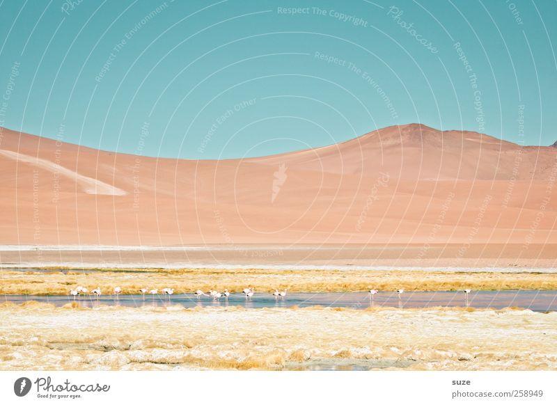Chile Berge u. Gebirge Umwelt Natur Landschaft Urelemente Erde Himmel Sommer Klima Schönes Wetter See Flamingo hell Südamerika Pastellton Salar de Atacama