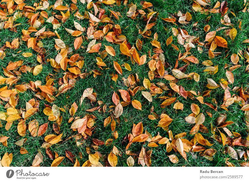 Natur Pflanze Farbe schön grün Landschaft rot Baum Blatt Wald gelb Herbst natürlich Gras Garten braun
