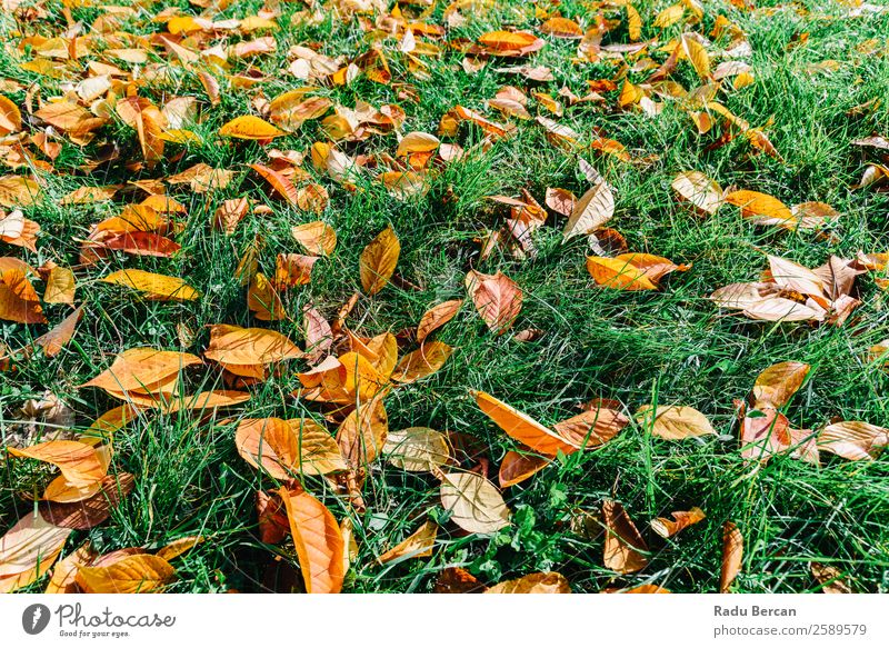 Natur Pflanze Farbe schön grün Landschaft rot Baum Blatt Wald gelb Herbst Umwelt natürlich Gras Garten