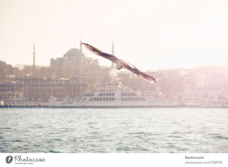 Flying. Stadt Meer Wärme Vogel fliegen Skyline Möwe Sehenswürdigkeit Fähre Istanbul Hafenstadt Bosporus Hagia Sophia