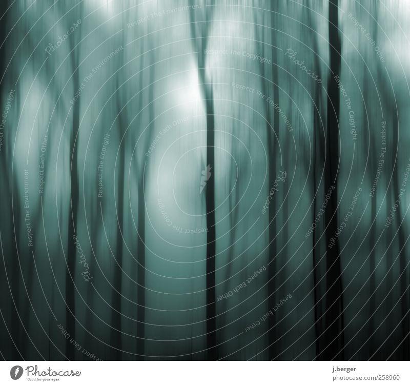 blau im Wald Umwelt Natur Landschaft Pflanze Herbst Winter Nebel Baum Urwald ästhetisch außergewöhnlich dunkel gruselig schwarz weiß Angst Volksglaube Farbfoto