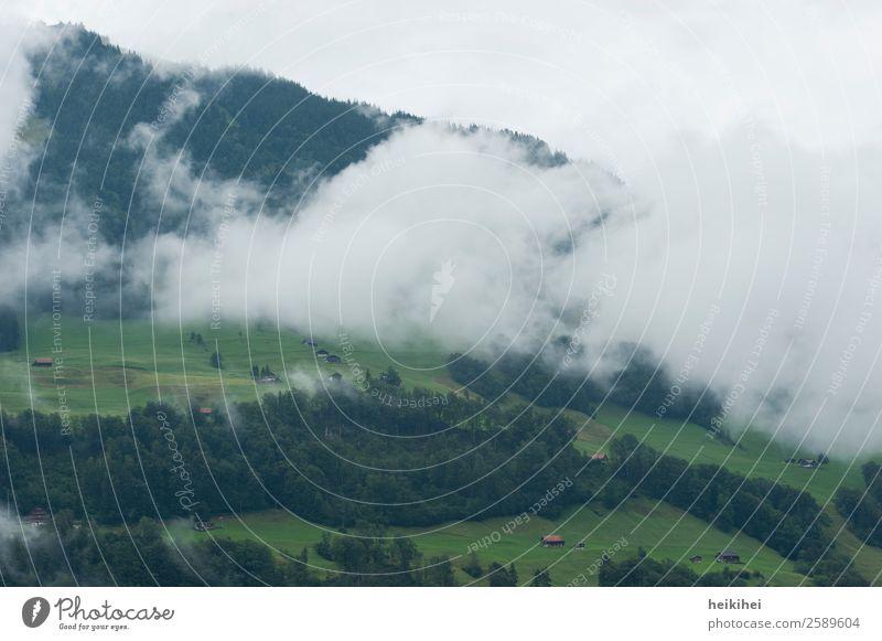 Nebelwolken in den schweizer Bergen an einem trüben Tag Natur Landschaft Pflanze Himmel Sommer Baum Gras Blatt Grünpflanze Wiese Feld Wald Hügel