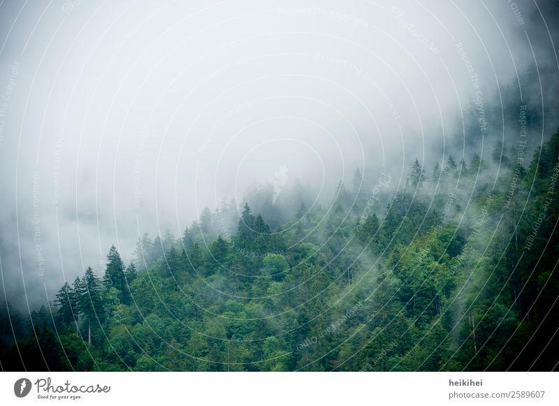 Wald im Nebel Natur Landschaft Sommer Herbst Pflanze Baum Urwald Berge u. Gebirge wandern dunkel fantastisch natürlich grün Stimmung schön Abenteuer Bewegung