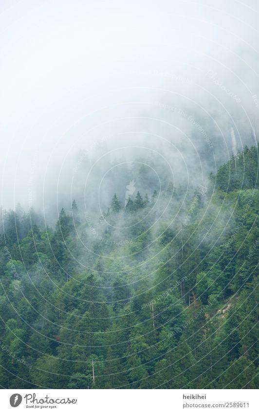 Nebelwald Umwelt Natur Landschaft Pflanze Himmel Sommer Herbst Baum Blatt Wald Hügel Alpen Berge u. Gebirge dunkel natürlich braun grau schwarz ruhig Wolken