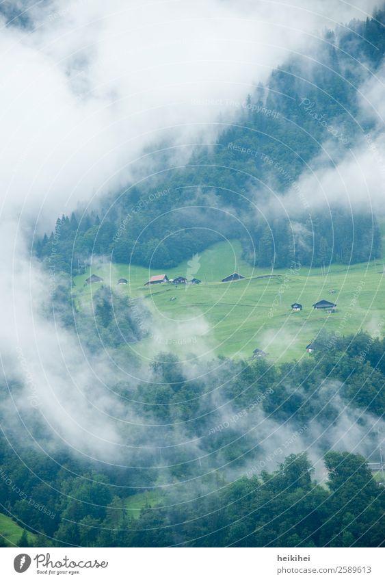 Schweizer Idylle im Morgennebel Himmel Natur Sommer Pflanze blau grün Landschaft Baum Haus Wolken Einsamkeit ruhig Wald Berge u. Gebirge Herbst Umwelt