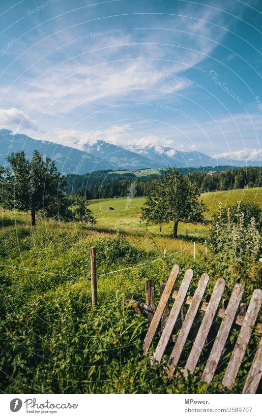berge wiesen wälder Umwelt Landschaft Schönes Wetter Alpen Berge u. Gebirge Gipfel Schneebedeckte Gipfel schön Zaun Streuobstwiese Alpenwiese Baum Feld